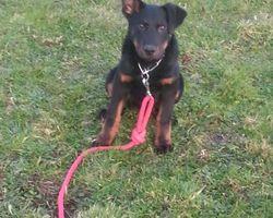 Seikapuce Educateur Canin et C – Miniac - Eleves en tous genre 2014