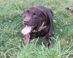 Seikapuce Educateur Canin et C – Miniac - Eleves en tous genres