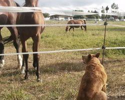 Seikapuce Educateur Canin et C – Miniac - Exercices pas toucher