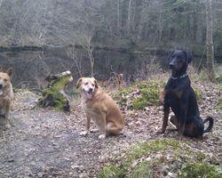 Seikapuce Educateur Canin et C – Miniac - Ma petite équipe