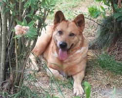 Seikapuce Educateur Canin et C – Miniac - Moi