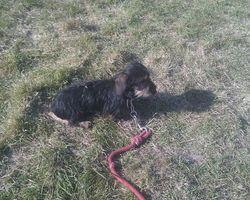 moi et l équipe nb - seikapuce éducation canine