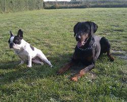 moi élios seika et tara - seikapuce éducation canine