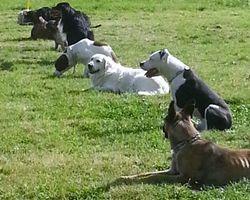 Seikapuce Educateur Canin et C – Miniac - Lecons collectives